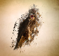 Falcon, Abstract Animal Concept - PhotoDune Item for Sale