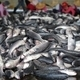 Large Catch of Grey Mullet Fish - PhotoDune Item for Sale
