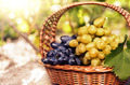 Grapes in the basket - PhotoDune Item for Sale