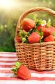 Strawberries in the basket - PhotoDune Item for Sale
