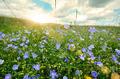 Summer Landscape - PhotoDune Item for Sale