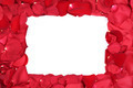 Frame from red roses flowers on Valentine's and mothers day with copyspace