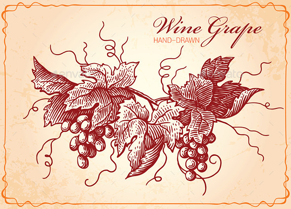 GraphicRiver Wine Grapes Vintage Style Illustration 9983571