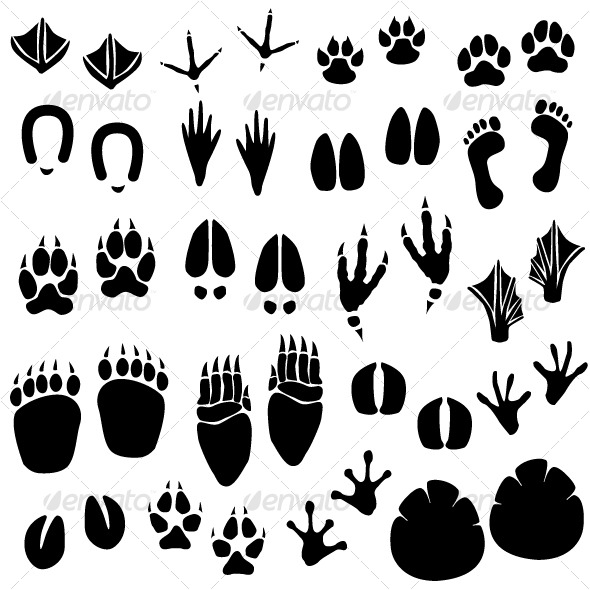 Animal Footprint Track Vector Graphicriver