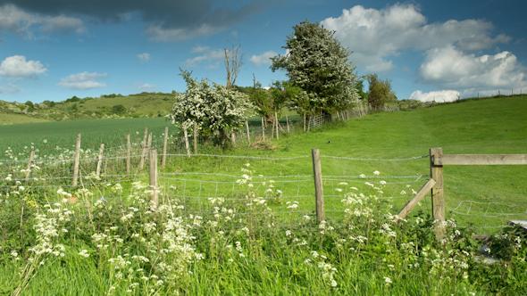 England Countryside Rural Summer Field 8
