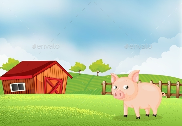 Pig on the Farm with a Barn