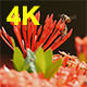 Bee and Ixora 02 - VideoHive Item for Sale