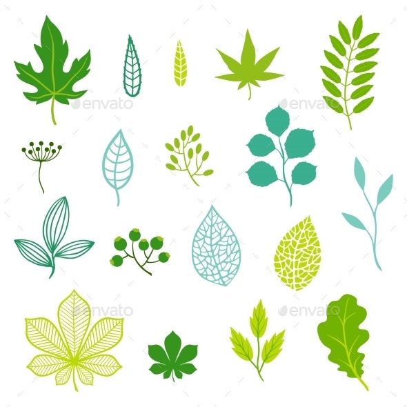 GraphicRiver Green Leaves and Elements 9997926