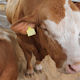 Livestock Sector 7