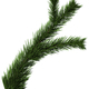Christmas tree fir branch - PhotoDune Item for Sale