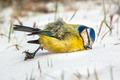 Winter Victim Bird - PhotoDune Item for Sale