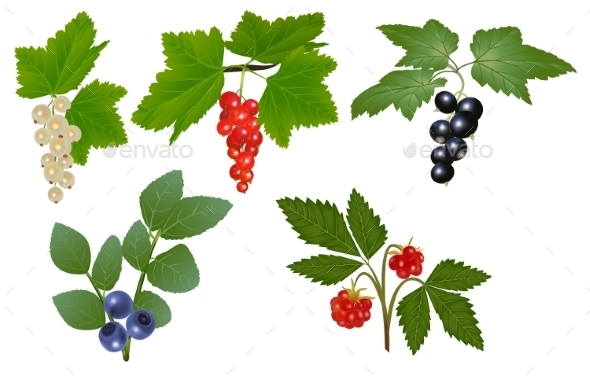 GraphicRiver Set of Berries 10015031