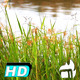 River Plant Dancing Wind - VideoHive Item for Sale