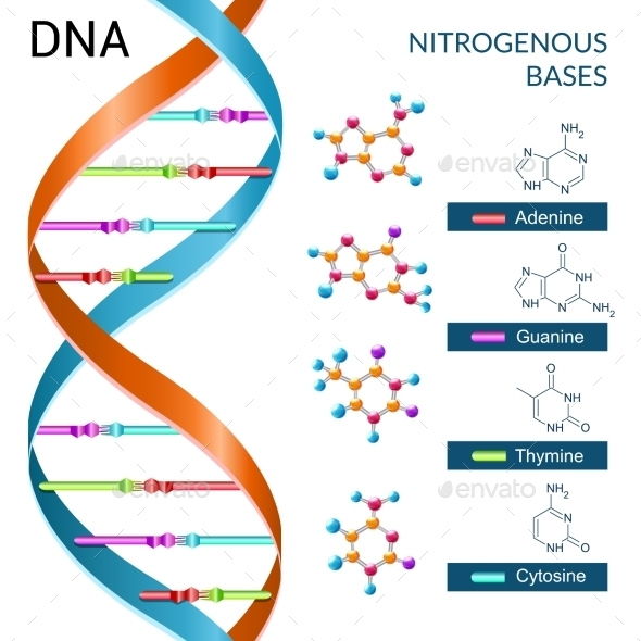 GraphicRiver Dna Bases Poster 10019224