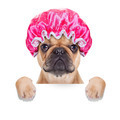 shower cap - PhotoDune Item for Sale