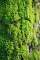 Moss growing on tree in forest - PhotoDune Item for Sale