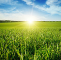 Beautiful sunset on green field - PhotoDune Item for Sale