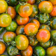 Colorful Juicy Ripe Heirloom Tomatoes - PhotoDune Item for Sale