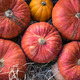 Pumpkins for decoration at Campo dei Fiori, Rome - PhotoDune Item for Sale