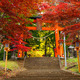 Torii gate to chureito pagoda in autumn, Fujiyoshida, Japan - PhotoDune Item for Sale