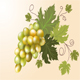 White grapes   - GraphicRiver Item for Sale