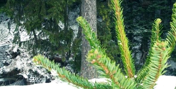 Christmas Pine Tree Intro