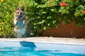 dog jumping into the swimming in the pool - PhotoDune Item for Sale