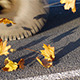 Cars Driving On Autumn Leaves 1 - VideoHive Item for Sale