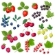 Set of Berries - GraphicRiver Item for Sale