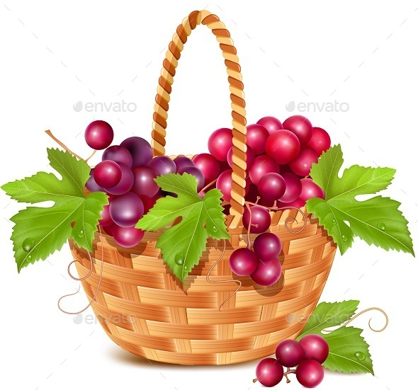 Basket with Grapes Vector
