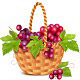 Basket with Grapes Vector - GraphicRiver Item for Sale