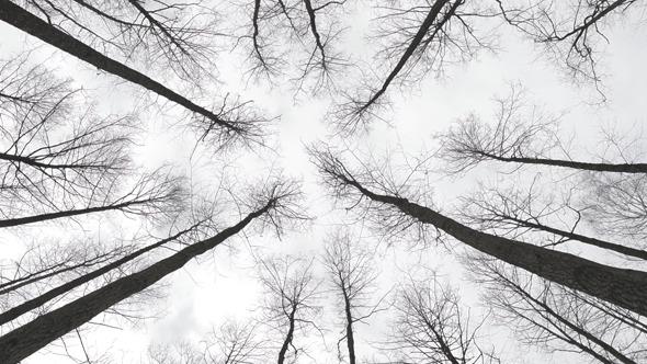 Trees & Wind