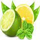 Yellow Lemon and Green Lime Vector - GraphicRiver Item for Sale