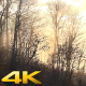 Mist and Vapor in the Woods 2 - VideoHive Item for Sale