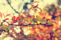 Colorful background of autumn leaf, vintage look - PhotoDune Item for Sale