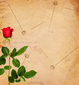 Vintage Background with Red Rose - PhotoDune Item for Sale