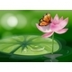 Butterfly with Flower - GraphicRiver Item for Sale