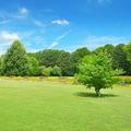 Beautiful meadow - PhotoDune Item for Sale