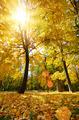 Maple leaves - PhotoDune Item for Sale