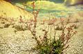 Dry soil - PhotoDune Item for Sale