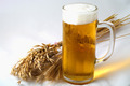 Barley and beer - PhotoDune Item for Sale