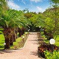 alley with tropical palm trees and lawn - PhotoDune Item for Sale