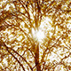 Sunlight Through Trees - VideoHive Item for Sale