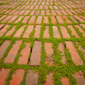 Creepers Growing Around the Edges of Brick Pavers - PhotoDune Item for Sale