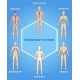 Human Body Systems Illustration - GraphicRiver Item for Sale