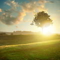 landscape with tree on sunset - PhotoDune Item for Sale