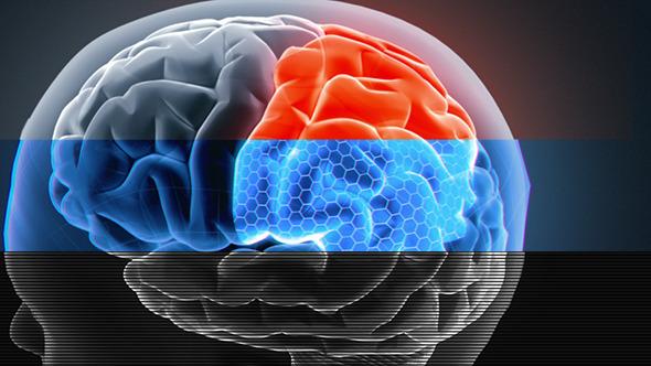 Male Brain 3