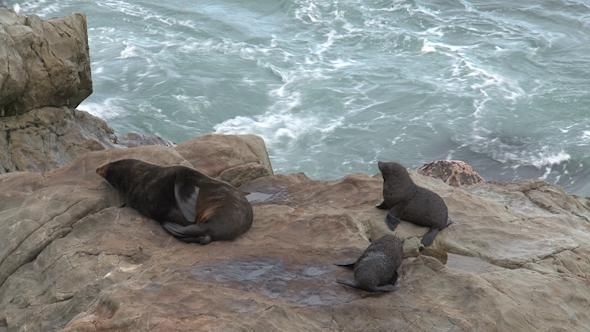 Seals In New Zealand 13