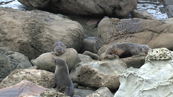 VideoHive Seals New-Zealand 21 10072697