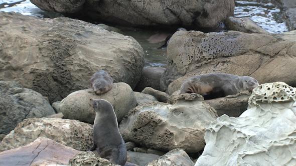 Seals New-Zealand 21